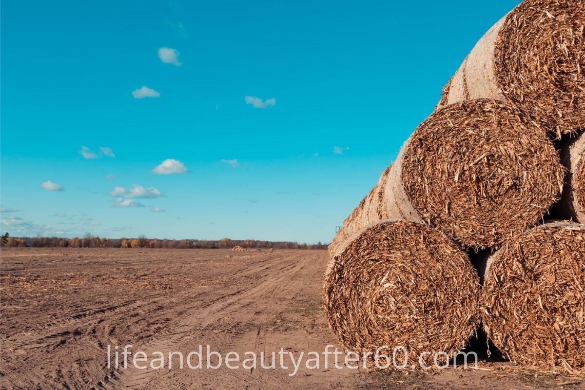 Harvested Hay Field with rolls of hay